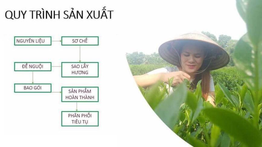 Quy trình sản xuất trà Tân Cương