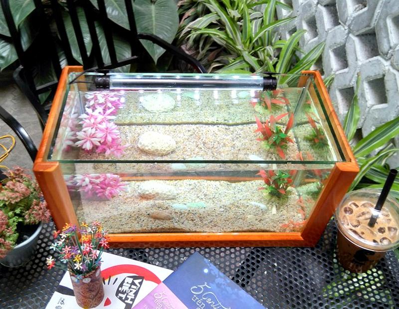Bể Cá Mini Khung Gỗ Cỡ Lớn - 40 X 20 X 20 (Cm)