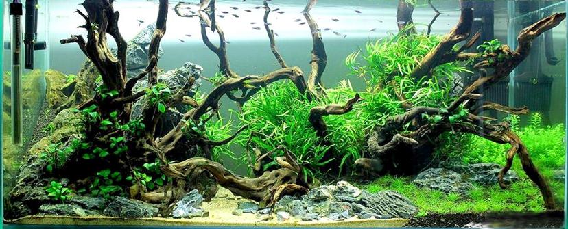 Bể thủy sinh mini, tiểu cảnh xanh dưới nước độc đáo trang trí nhà