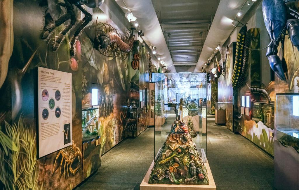 Insectarium là dạng terrarium mô phỏng môi trường sống ngoài tự nhiên của côn trùng.