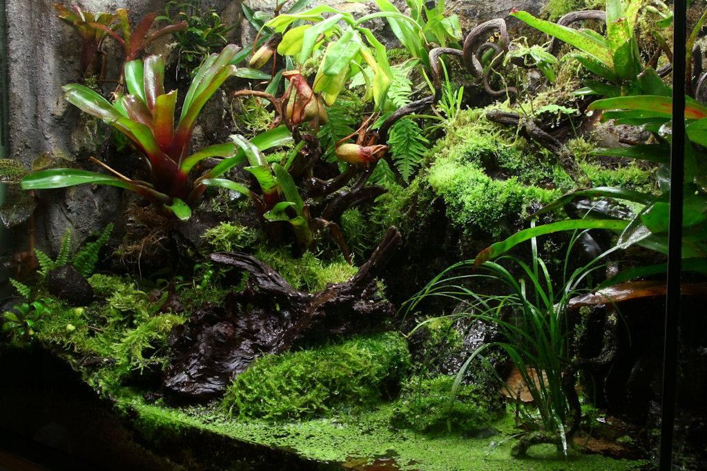 Rainforestterrarium Mô phỏng môi trường sống của động thực vật của rừng mưa nhiệt đới.