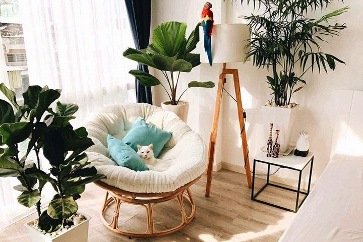Ghế mây Papasan rất đa năng có thể dùng trong nội thất phòng khách, phòng ngủ, phòng đọc sách