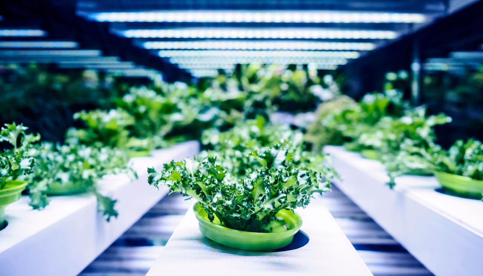 Đèn led chiếu sáng công nghiệp dùng trống rau trong nhà kín hoàn toàn