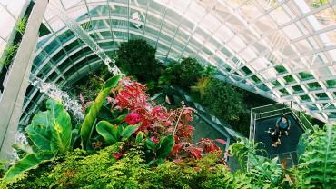 Vườn mini - Nơi tìm lại sự thư thái và cân bằng cuộc sống