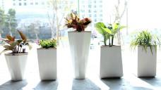 Chậu trồng cây thông minh - Vườn cây tự tưới trong ngôi nhà hiện đại