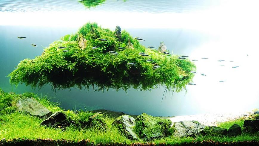 Hồ thủy sinh mini  – Tìm về sự thư thái qua cái hồn thiên nhiên