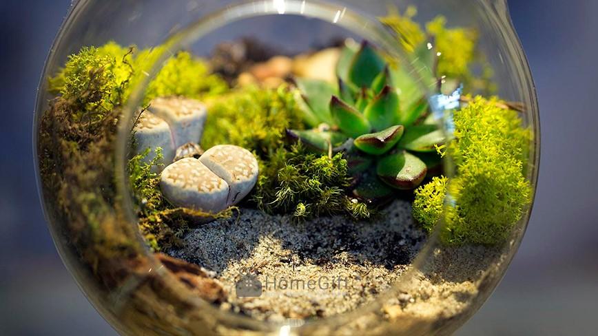 Terrarium - Ý tưởng trồng cây trong lọ thủy tinh để bàn hoặc treo tường cực đáng yêu