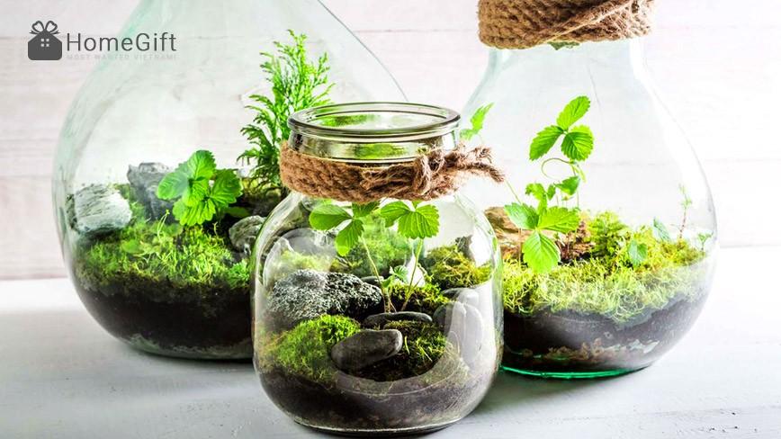 Kết quả hình ảnh cho trồng cây trong nhà